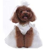 Платье свадебное слоновая кость